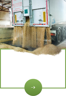 Buy and transport – wheat, corn, canola, sunflower and other products.