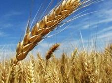 Über die Firma  CTT Cereals Trading & Transport